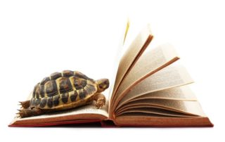 patient turtle on a book